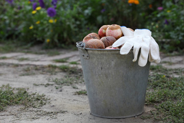 Bucket of rotten apples