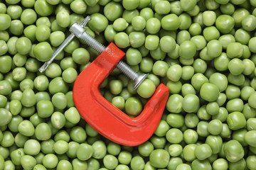 Green pea in a clamp
