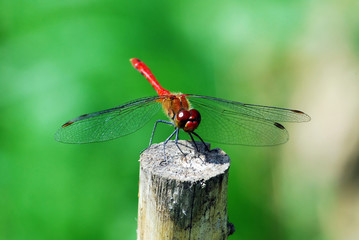 Dragonfly rest on the stake