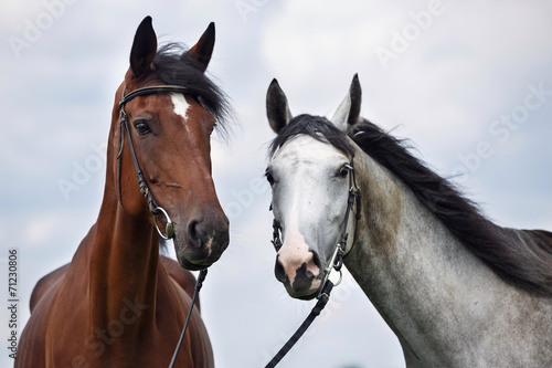 Two horses, white and chesnut © fotorince