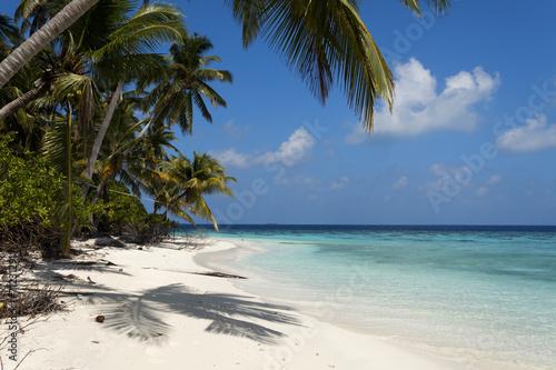 tropikalna wyspa palma morze i niebo