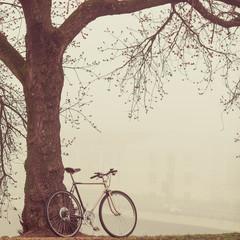 vintage bike near tree in fog