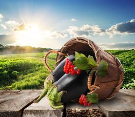 Eggplants and landscape
