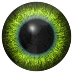 Eye iris generated hires texture