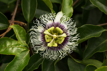 Whimsical tropical flower among green foliage