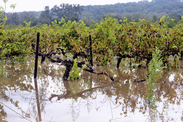 Flood vines