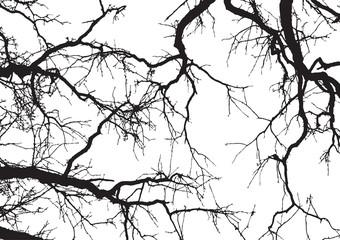 Baum und Äste3
