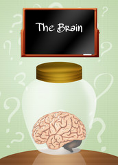 brain in the jar
