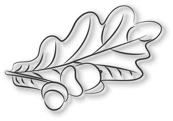 Желуди