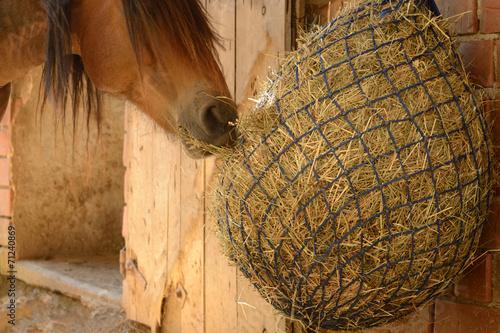 Keuken foto achterwand Paarden Rauhfutter, q.
