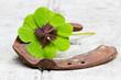 Hufeisen und vierblättriges Kleeblatt auf Holz