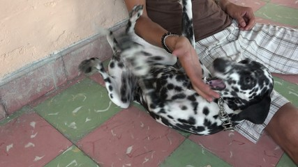 Young man playing with dalmatian pet