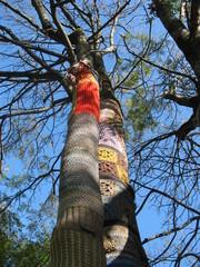 Любовь и дерево