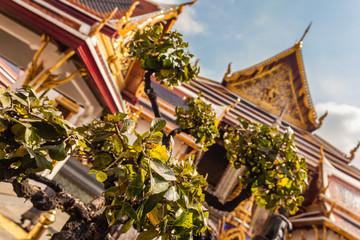 Tree in Wat Phra Kaew