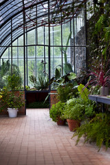 Plants in a old greenhouse