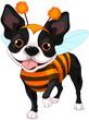 Obrazy na płótnie, fototapety, zdjęcia, fotoobrazy drukowane : Halloween Boston terrier