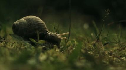 Snail in Garden #2