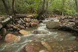 Woodland Stream in the Chiricahua Mountains - Portal, Arizona poster