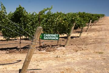 Wine Sign at California vineyard