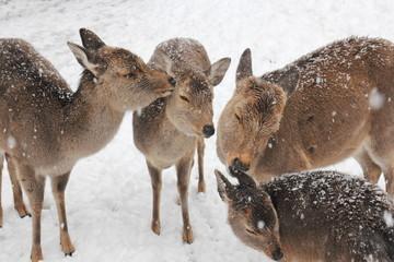 雪景色 奈良公園の鹿