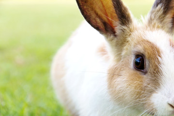 close-up of cute bunny rabbit