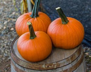 Three orange pumpkins on display