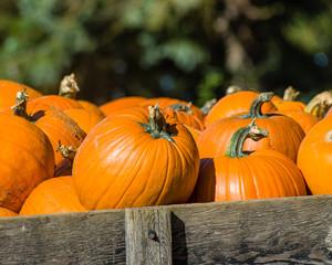 Bin of orange halloween pumpkins