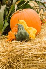 Gourds and orange pumpkin on hay