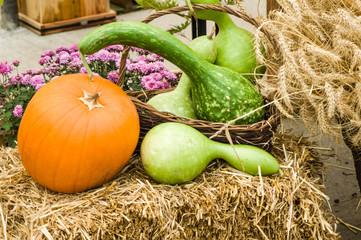 Squash and pumpkins on hay