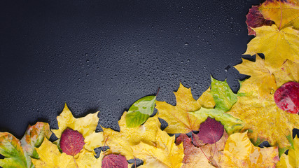leaf on wet black background right