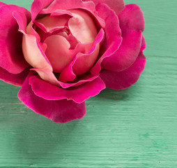 pink rose on green wooden background