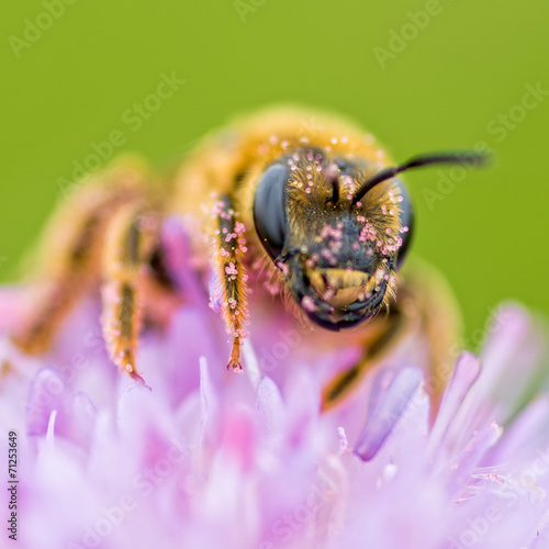 canvas print picture bee