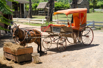 horse drawn carriage in a sunny and hot day