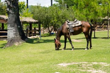 Horses graze on green grass in a hot sunlight day