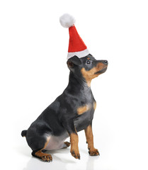 Dog in Santa hat