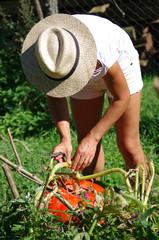 jardinage - récolte d'automne