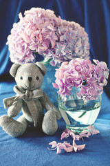 Pink hydrangea flowers in a vase on a blue background .