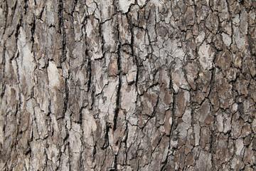 樹木 背景