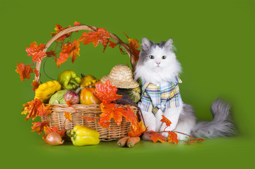 cat in the clothes of the farmer with his harvest