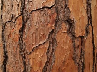Texture of a tree bark