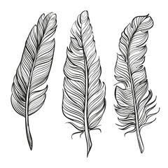 feathers set hand drawn vector llustration