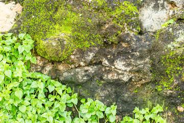ranite texture - design gray seamless stone abstract surface gra
