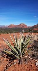 View of Oak Creek Canyon Arizona