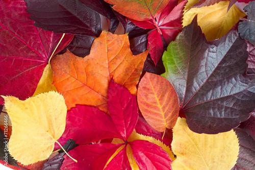 canvas print picture Herbstblätter-Variation