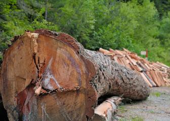 débardage,gestion des forêts,énergie renouvelable