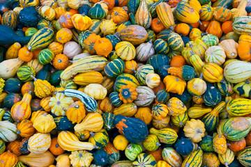Bunch of small pumpkins