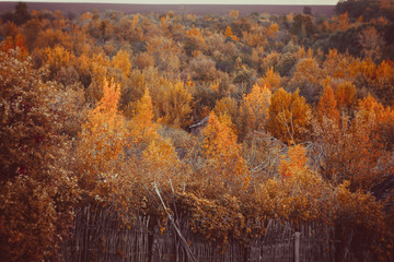 Beautiful autumn forest in national park