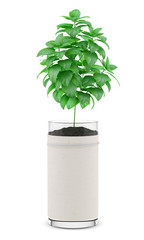 mint plant in pot isolated on white background