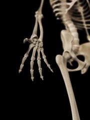 medical 3d illustration of the hand bones