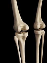 medical 3d illustration of the knee bones